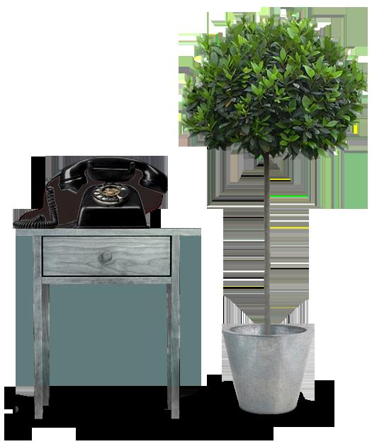 phone-plant